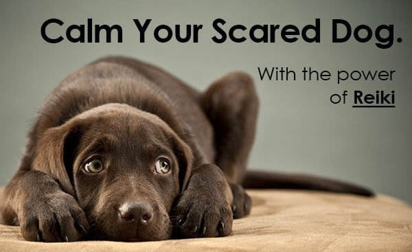 Calm Your Scared Dog With the Power of Reiki